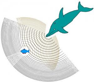 ecolocazione_delfino